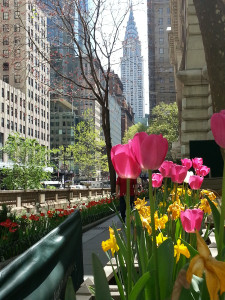 Tulips at Bryant Park in New York City